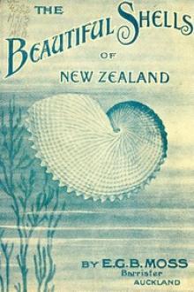 Beautiful Shells of New Zealand