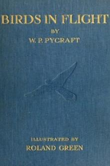 Birds in Flight by William Plane Pycraft