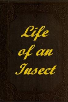 The Life of an Insect