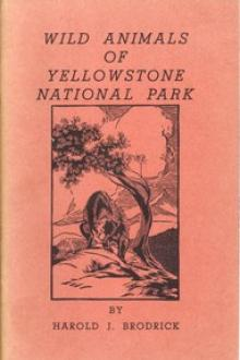Wild Animals of Yellowstone National Park by Harold J. Brodrick