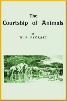 The Courtship of Animals by William Plane Pycraft