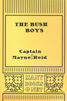 The Bush Boys by Mayne Reid