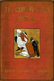 The Curious Book of Birds
