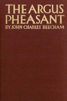 The Argus Pheasant