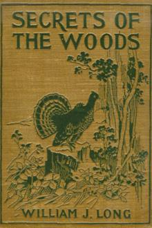 Secret of the Woods by William J. Long